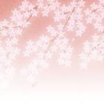 春のイメージは桜